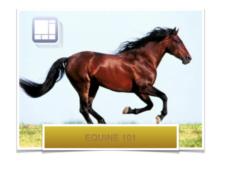 C3 course-equine 101