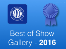 AKC-Best of Show